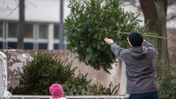 weihnachtsbaum abholung wiesbaden