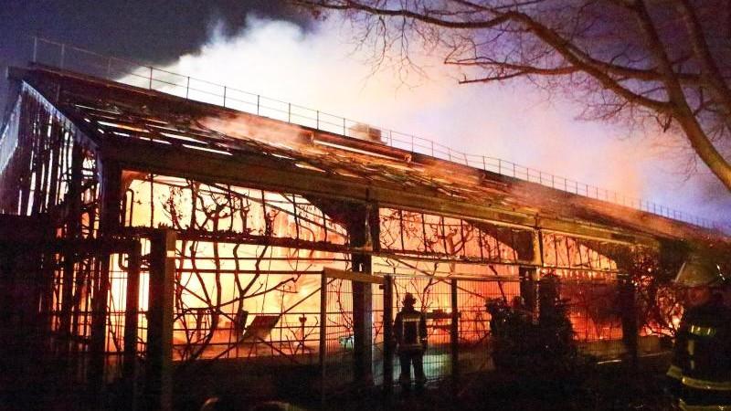 Brand im Affenhaus: Krefeld organisiert Kundgebung für Zoo