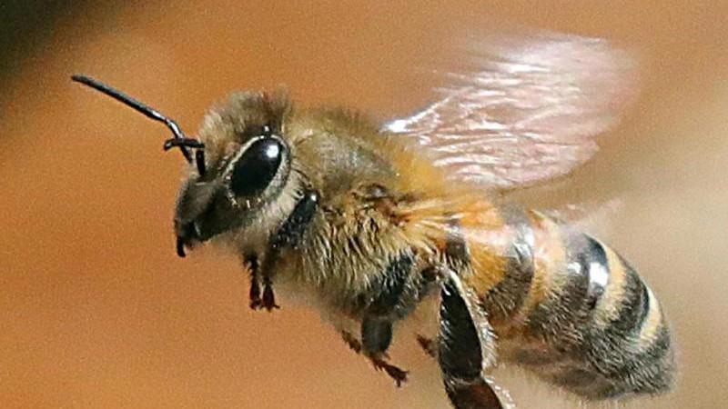 Milder Winter mit unklaren Folgen für Insekten und Natur