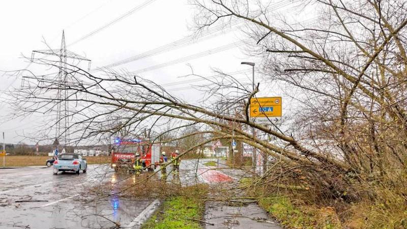 Sturm-Einsätze im Nordosten: Bäume und Äste auf Straßen