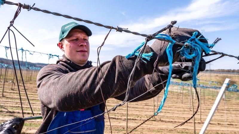 Coronavirus bringt Hopfenbauern Probleme