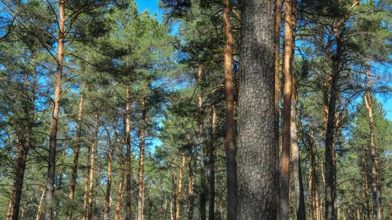 Aufatmen in Sachsens Wald: Brandgefahr sinkt dank Kaltfront