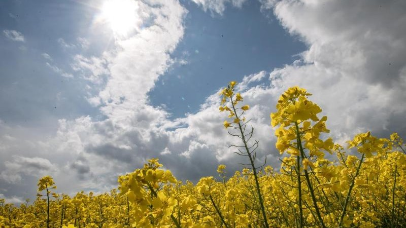 Sonne-Wolken-Mix in Rheinland-Pfalz und im Saarland erwartet