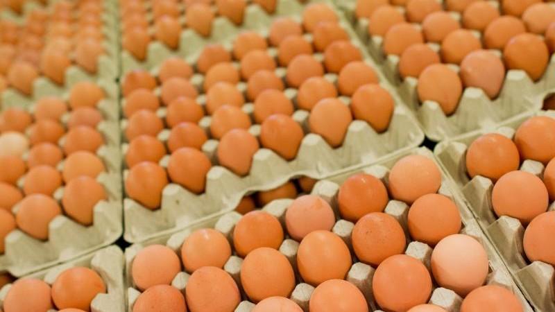 Lebensmittel - Melle - Freilandeier wegen Gesundheitsgefahr zurückgerufen