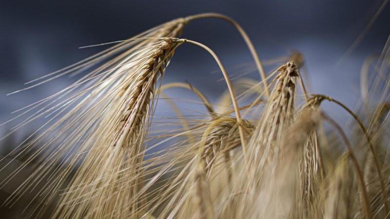 Bayerische Junglandwirte fordern Reformen für die Branche