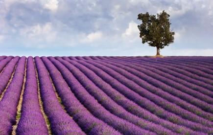 Europa Provence Frankreich, iStock