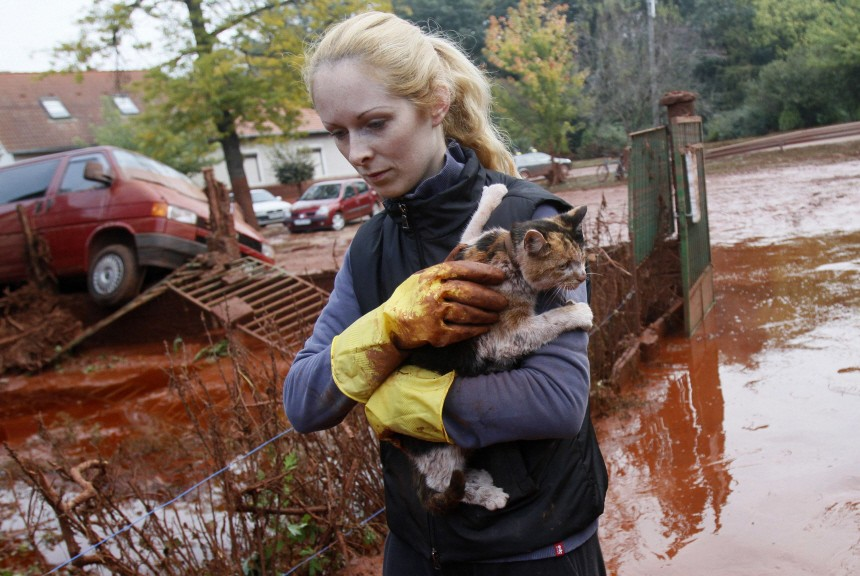 Resident rescues a cat from toxic sludge that flooded the village of Devecser