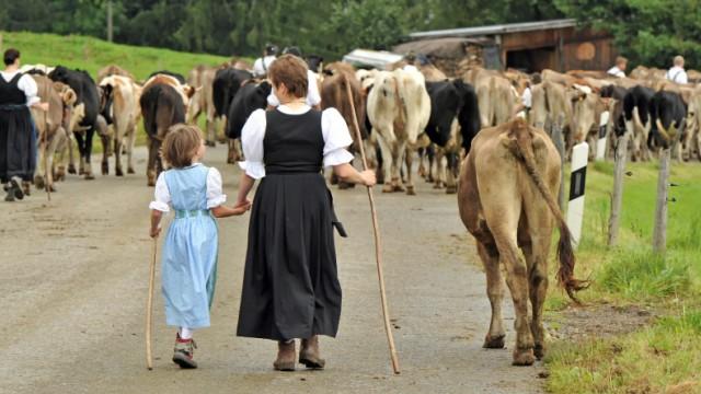 Viehscheid Oberstaufen