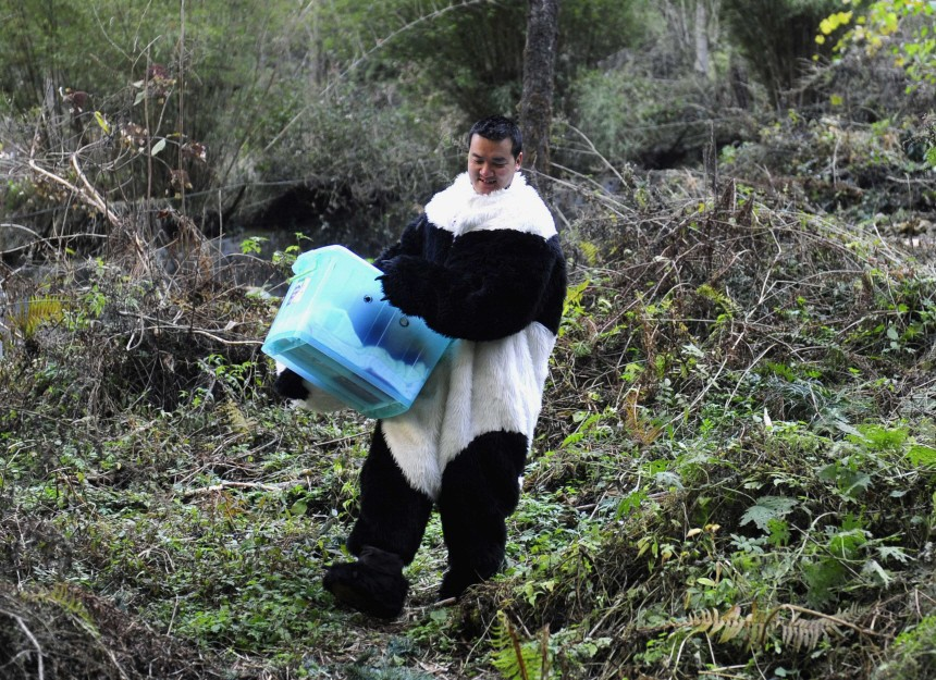 A researcher dressed in a panda costume carries a panda cub in a box before its physical examination at the Hetaoping Research and Conservation Center for the Giant Panda in Sichuan province