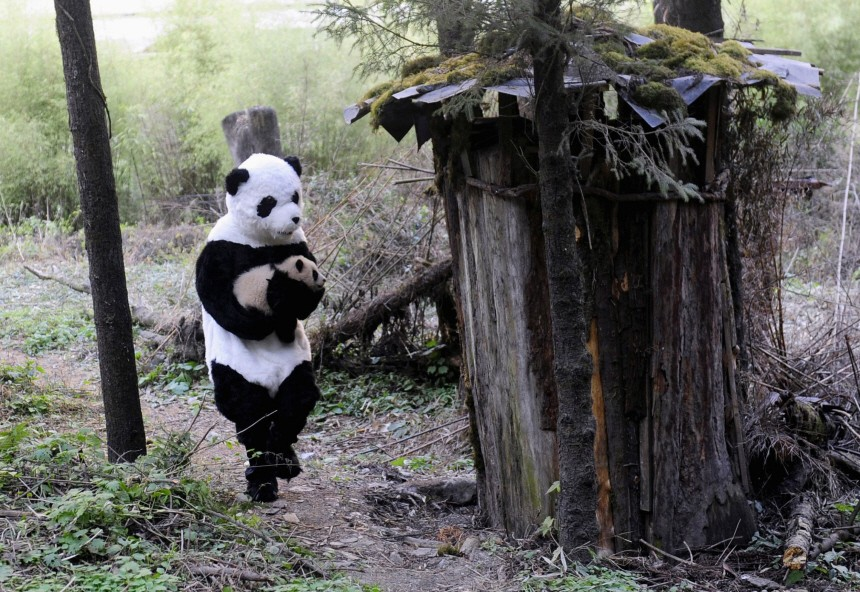 A researcher dressed in a panda costume carries a panda cub after its physical examination at the Hetaoping Research and Conservation Center for the Giant Panda in Sichuan province