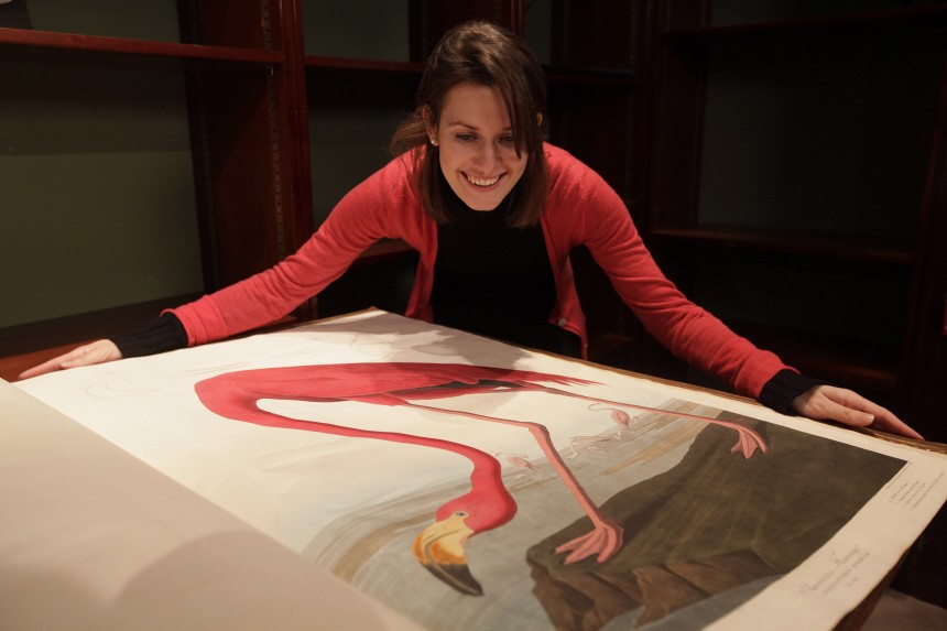 A Sotheby's employee poses with a page depicting an American Flamingo from John James Audubon's 'Birds of America', at Sotheby's in London