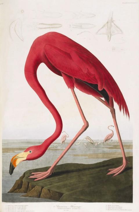 James Audubon's Birds of America at Sotheby's Auction