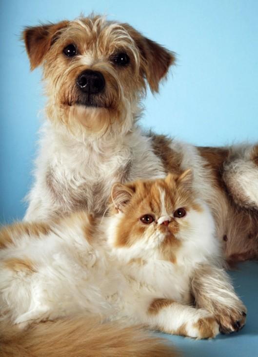 (Service-Bild) Hund und Katze sind sich einig: Altern ist keine Krankheit