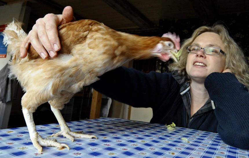 Die Vegetarierin und ein Huhn namens Rudi