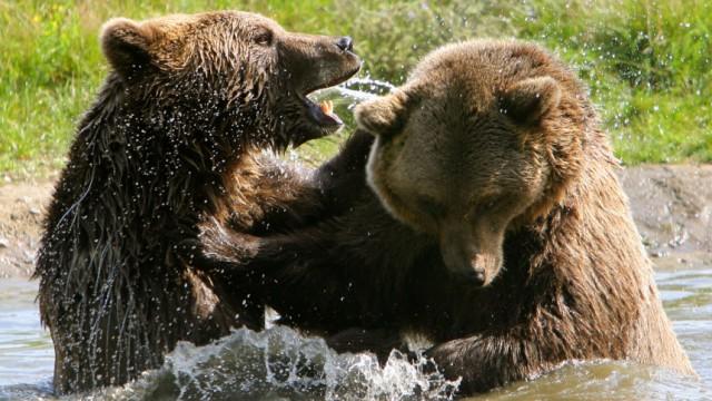 Bärenwald wird doppelt so groß - Warteliste für Tiere