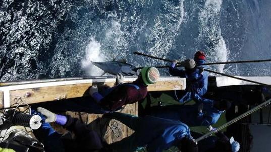Thunfisch Fischfang