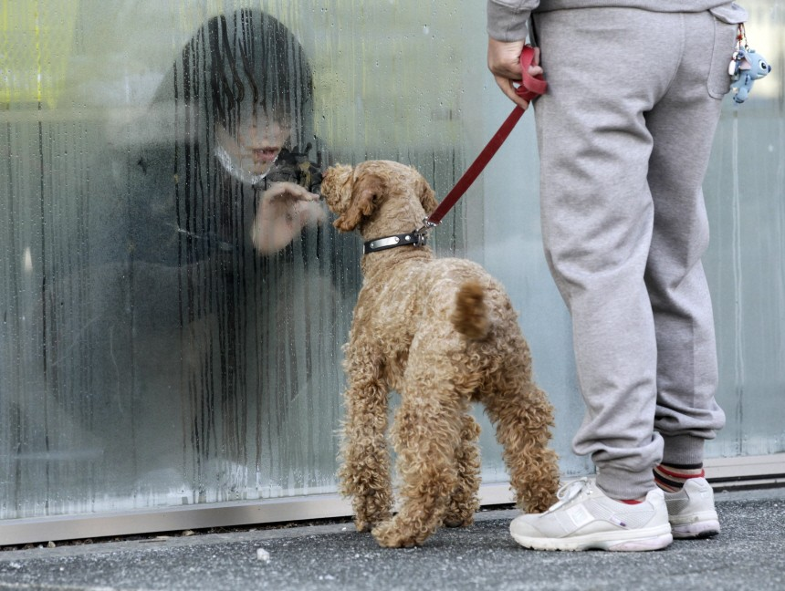 Girl who has been isolated at makeshift facility to screen, cleanse and isolate people with high radiation levels, looks at her dog through window in Nihonmatsu