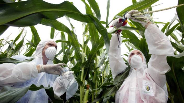 Gentechnik USA Monsanto