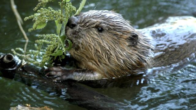 Artenvielfalt in Thueringen in Gefahr