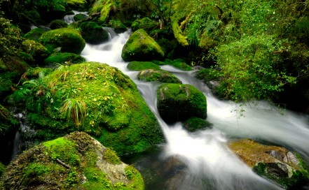Bachlandschaft in Neuseeland