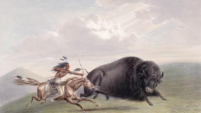 Büffeljagd