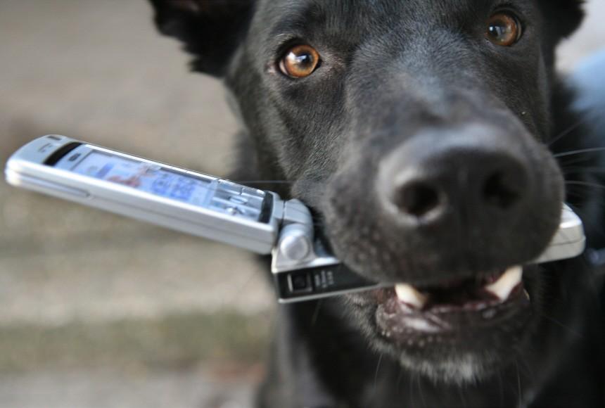 """Leinen-Stolperer und ´Angstbiss"""": Warum die Hunde-Haftpflicht l"""