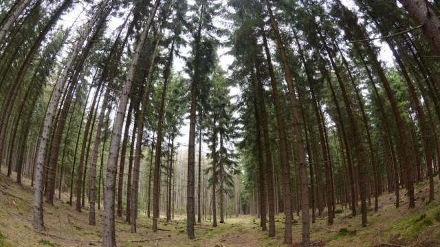 Deutsche und tschechische Kommunen streiten um Wald