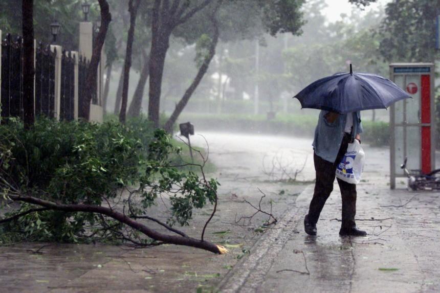MAN WALKS PAST FALLEN TRUNK IN HONG KONG
