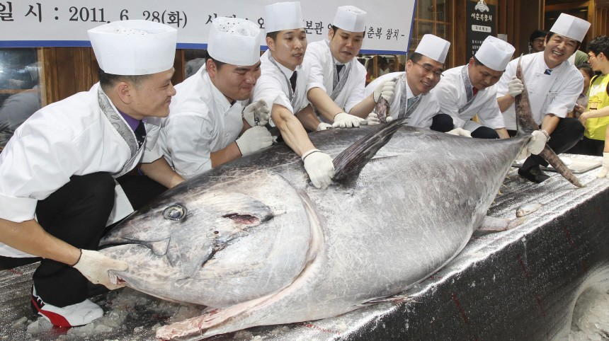Sushi chefs pose for photographs as they try to lift a 350kg (772 pounds), 2.7 metre  (9 feet) long bluefin tuna during an event promoting a restaurant in Seoul