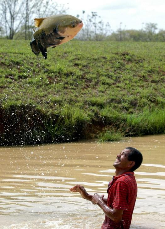 'Fliegender' Fisch