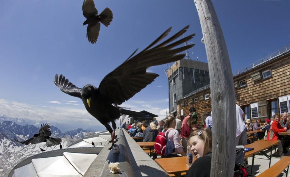 Caption-Korrektur: Vogelfuetterung auf dem Gipfel der Zugspitze