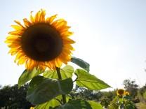 Natur und Freizeit: Kleiner Garten, großes Glück