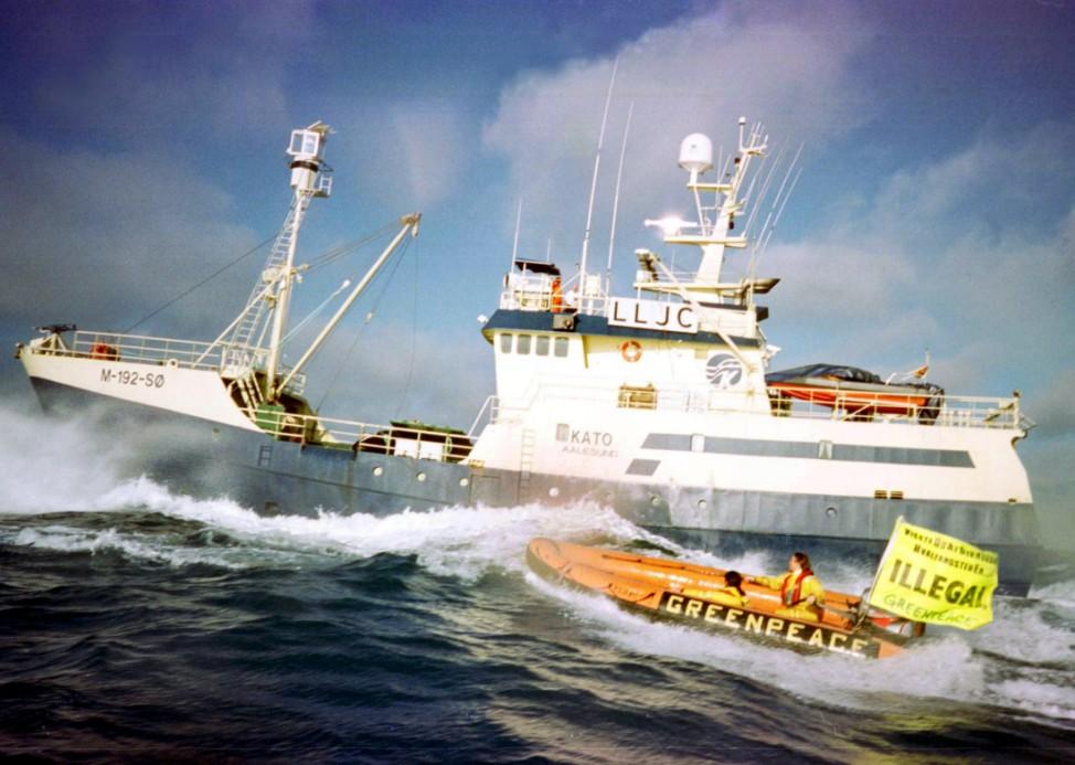 Schlauchboot beim Einsatz gegen den Walfang, 1999