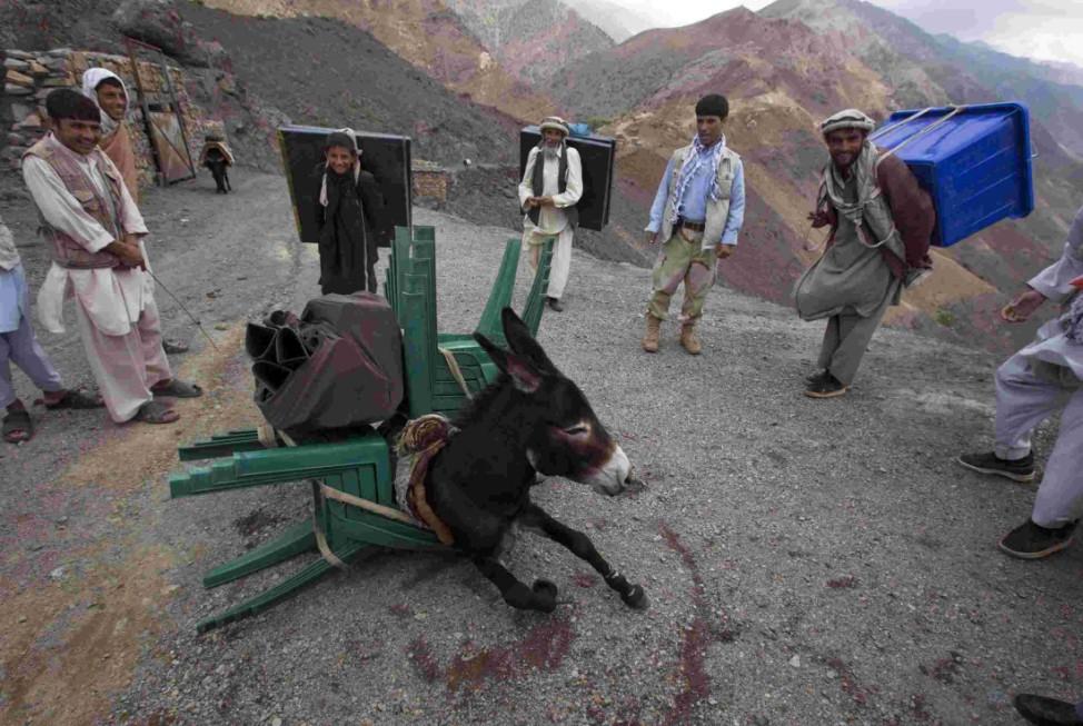 Skurrile Reisefotos, lustige Bilder Kategorie Reise: Esel in Afghanistan bricht unter der Last der Wahlutensilien zusammen