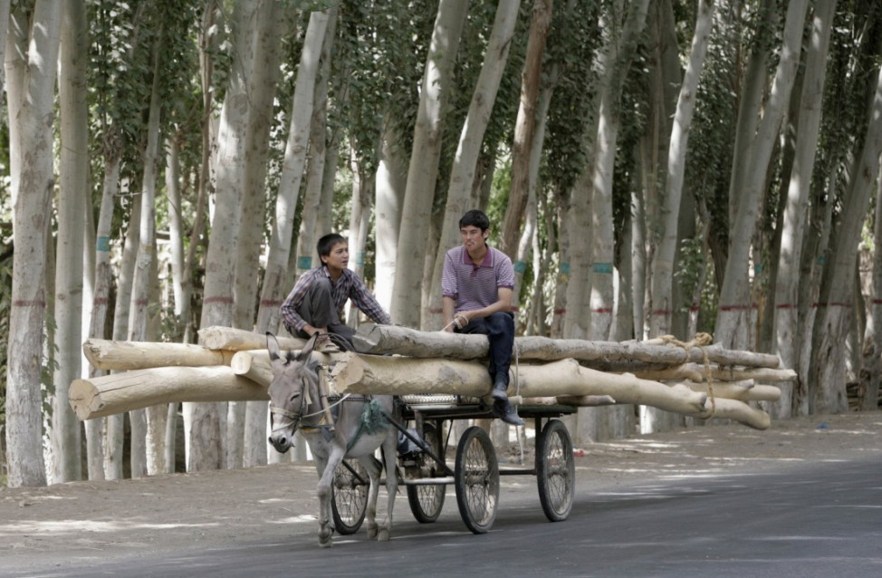 Skurrile Reisefotos, lustige Bilder Kategorie Reise: Esel transportiert Holzstämme