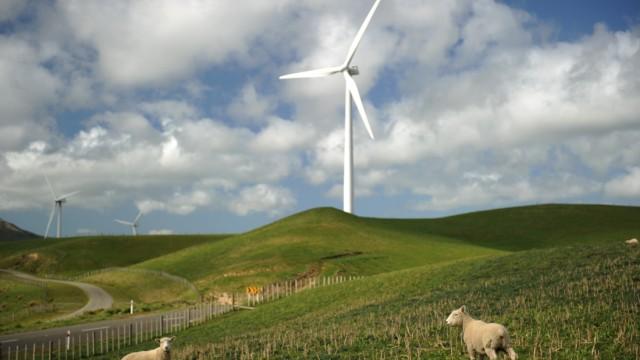 Ratingagenturen stufen Neuseelands Kreditwürdigkeit herab: Schafe unter einem Windrad in Neuseeland: Das Land hat lange alles richtig gemacht, jetzt kommt die Krise auch hier an.
