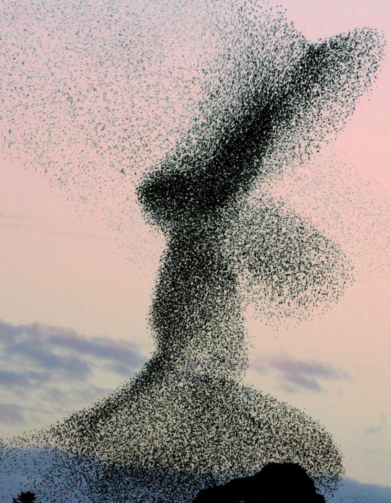 ALGERIA-BIRDS-IMMIGRATION