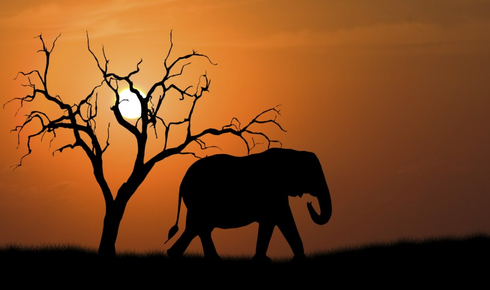 Südafrika Elefant