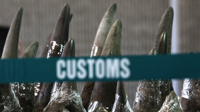 Part of a shipment of 33 rhino horns seized by Hong Kong Customs and Excise Department is displayed during a news conference in Hong Kong