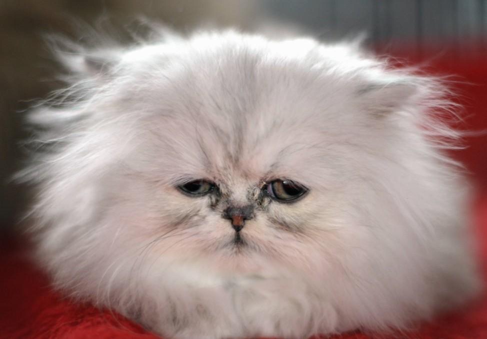 Haustier-Schau 'Animal'