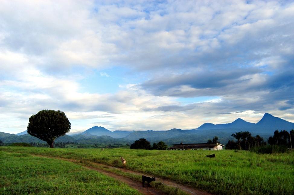 afrika ruanda virunga berggorilla
