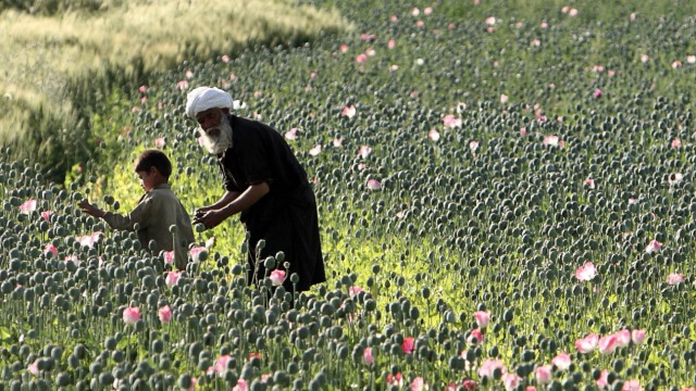 An Afghan man and boy harvest opium in a poppy field as U.S Marines patrol a village in Golestan district of Farah province