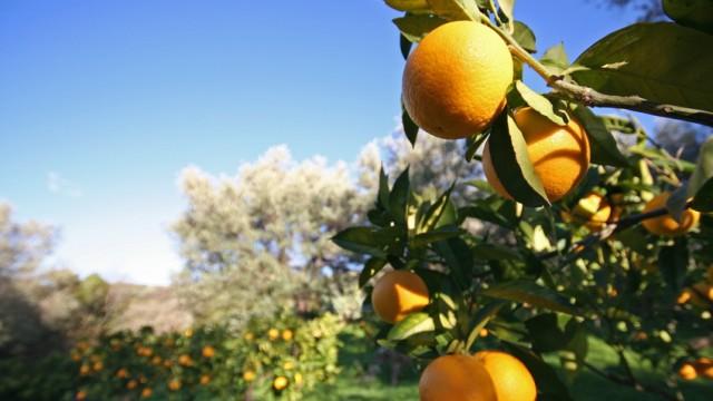 Sizilien Italien Orangen