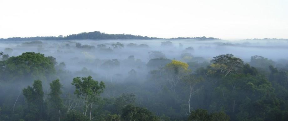 Amazonaswald: Pflanzen beeinflussen die Wolkenbildung.