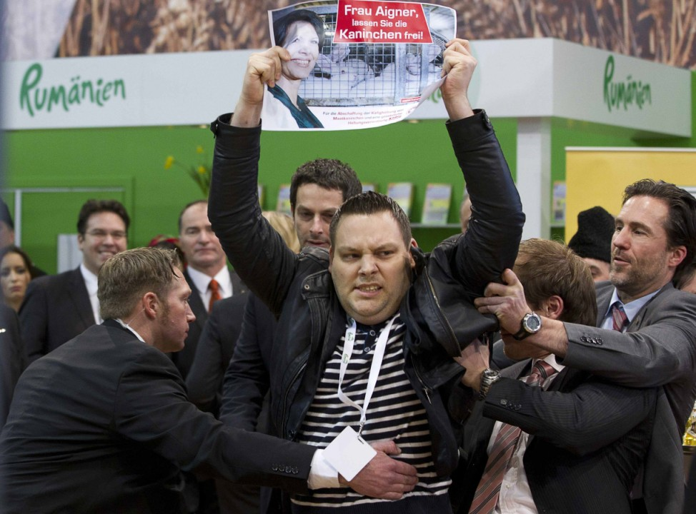 A man leads a cow in the animal pavilion at Green Week Agriculture and Food fair in Berlin