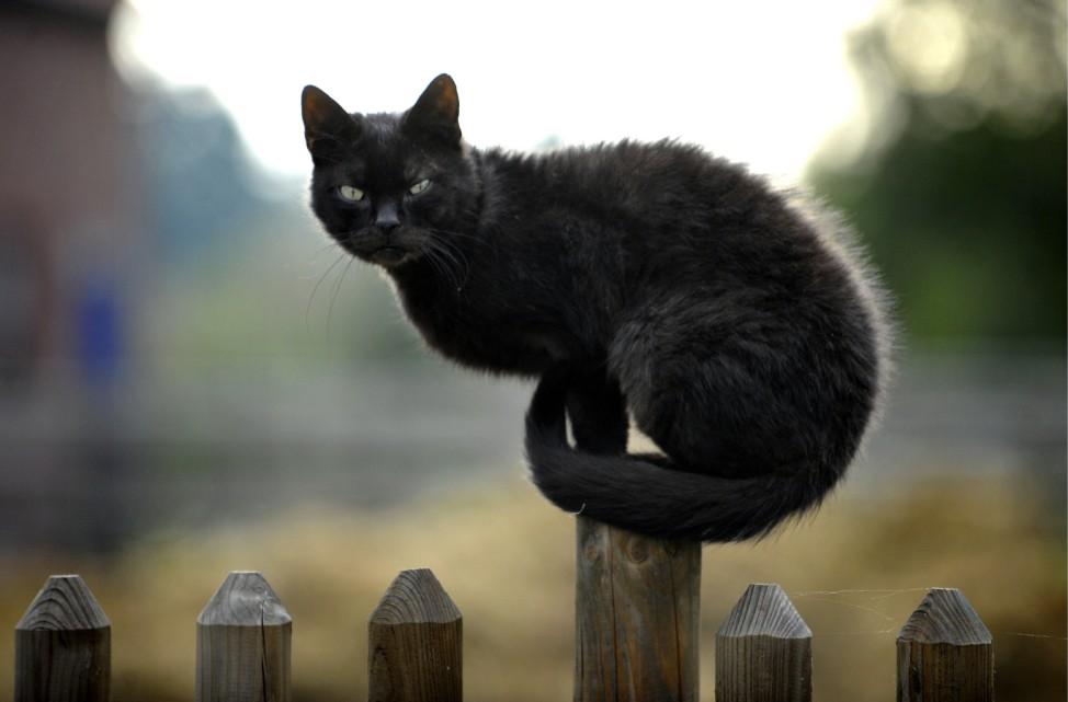 Tierschuetzer setzen sich für Kastrationspflicht von Katzen ein