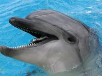 Neues Delfinarium in Griechenland - Großer Tümmler