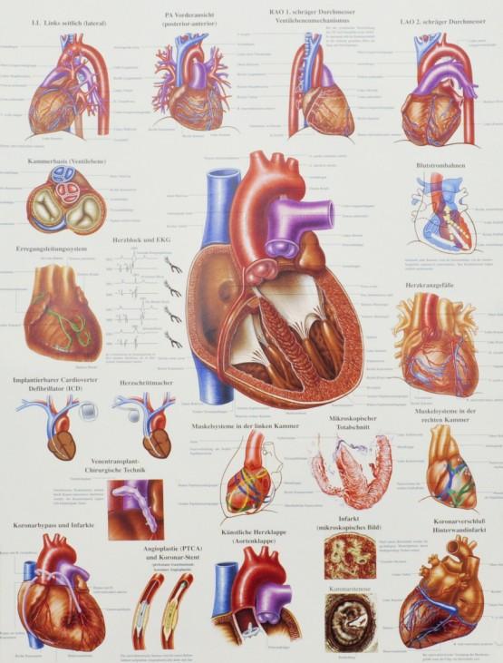 Thema Organspende, Spenderorgane