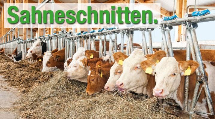 Bayerischer Bauernverband, Werbekampagne, Sahnenschnitten