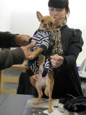 Hund; Designer; AFP